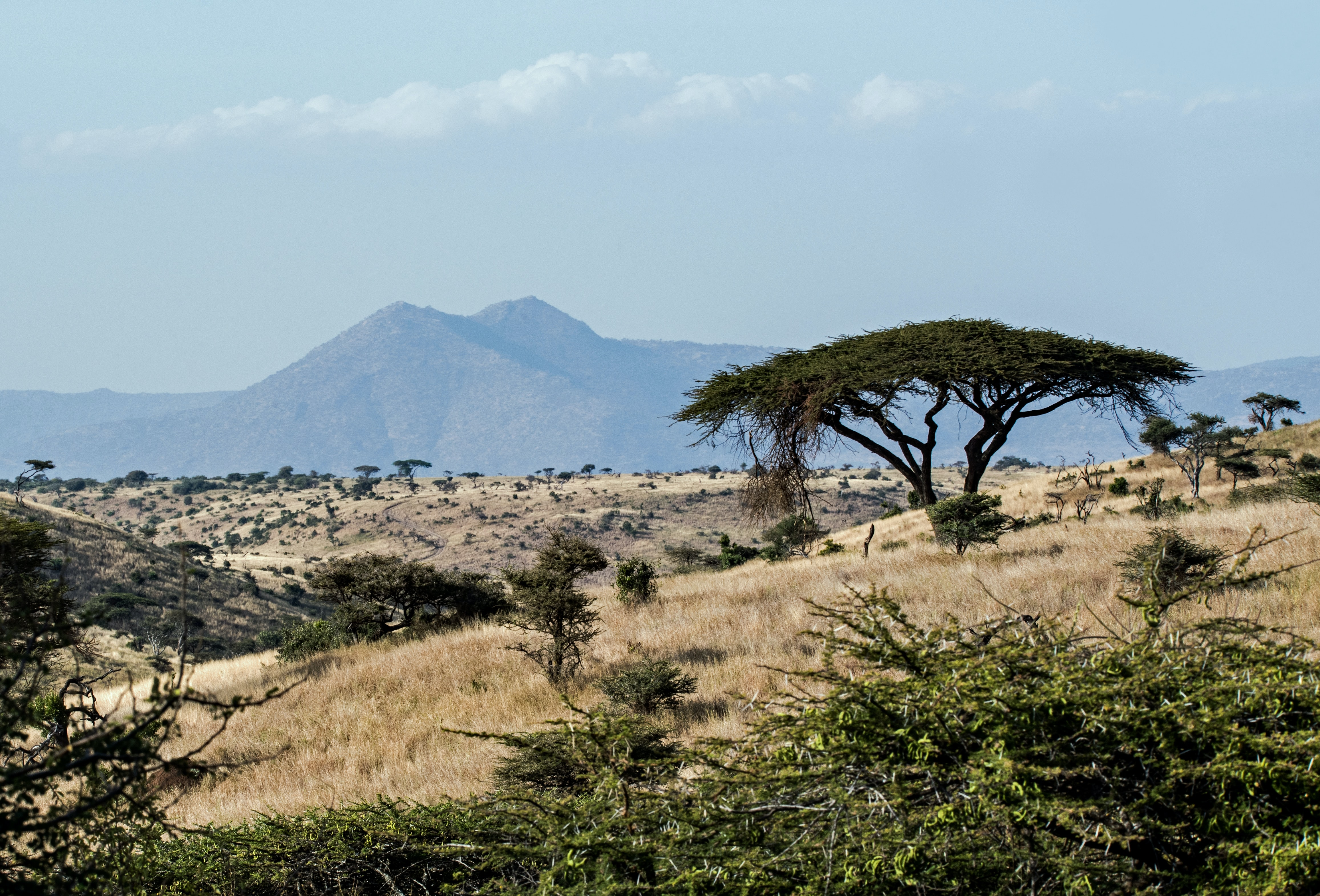 Mid-Term Review for Mount Kenya East Pilot Project for Natural Resource Management